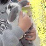 ウサギさん4-thumb-300xauto-1223